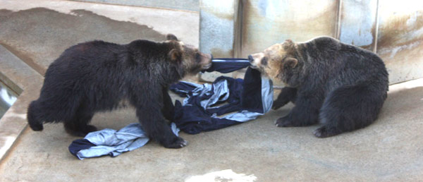 Дизайнерские джинсы от диких животных