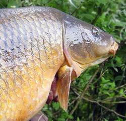 Разведение рыбы и раков на дачном участке