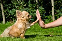 Открываем собственные курсы дрессировки собак
