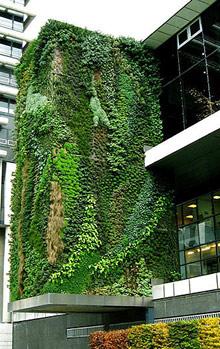 Заработок на вертикальном озеленении фасадов зданий