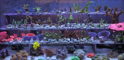 Бизнес на живых кораллах