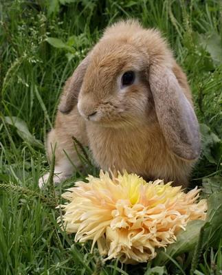 Декоративные Кролики – Прибыльный Бизнес или Хобби