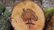 Самые главные проблемы древесины и как их компенсировать