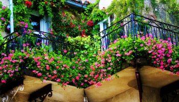 Почему нежелательно устраивать цветник на балконе