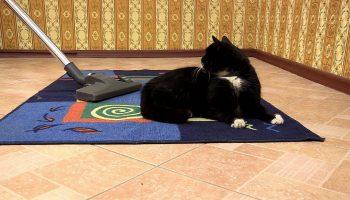 Как качественно очистить ковер от шерсти животных