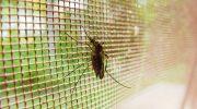 Почему противомоскитная сетка не спасает от маленьких насекомых