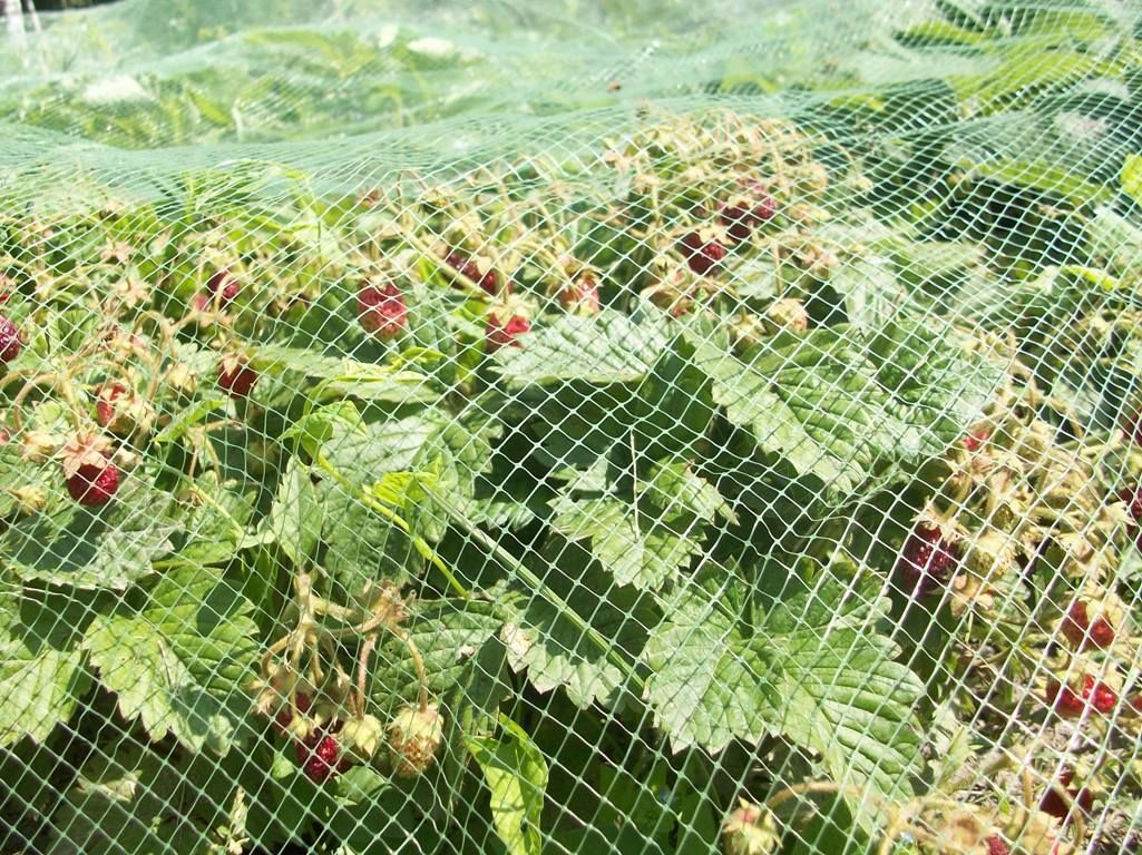 Защита урожая с помощью специальной сетки