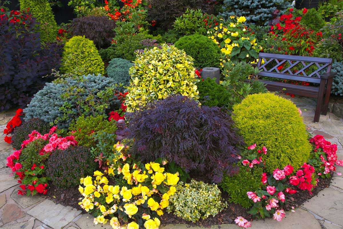 Лучшие декоративные кустарники для дачи