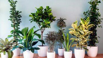 Тропические растения на подоконнике