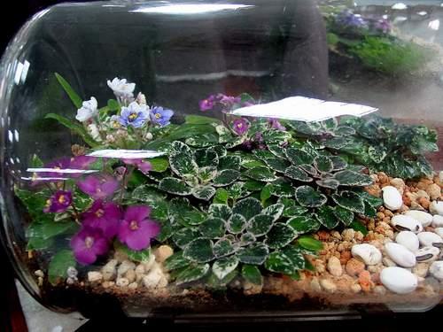 Сад в бутылке — домашний цветочный бизнес