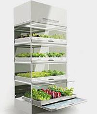 Эко мини-огород на кухне