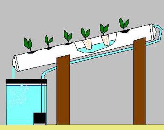 принцип действия гидропоники