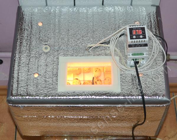 самодельный домашний инкубатор